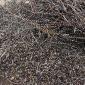 花桥回收铁刨花 昆山生铁销回收 废钢回收公司 欢迎咨询 佳琪